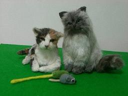 羊毛@猫2匹2