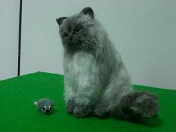 羊毛@猫1-4