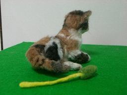 羊毛@猫2-2