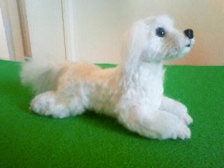 羊毛@マルチーズ6