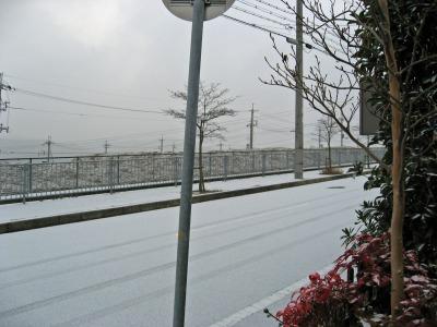 初雪 外の様子