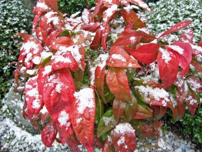 植栽にかかる雪