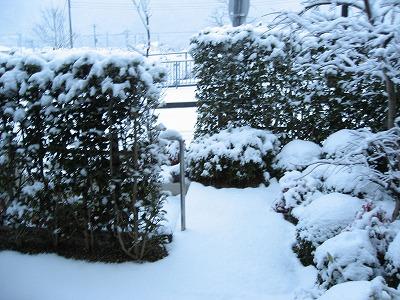 08.02.03 自宅_雪 (7)