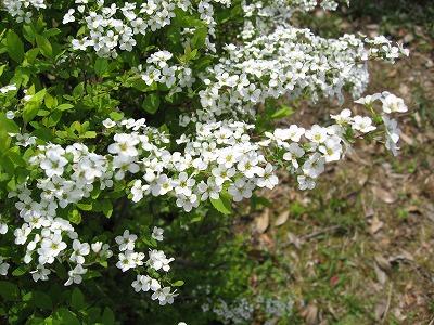 08.04.12 桜 (15)