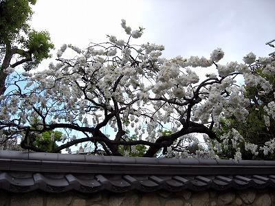08.04.19 香雪美術館(永楽展) (4)