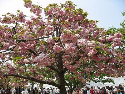08.04.28 姫路菓子博覧会 (16)