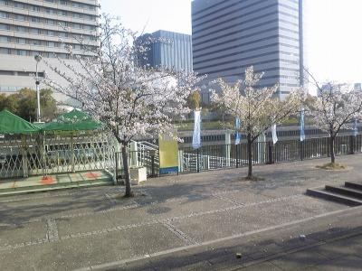 大阪城公園 桜満開 (8)