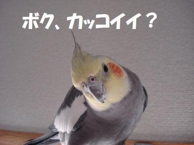 3月28日NO4 まめちゃん