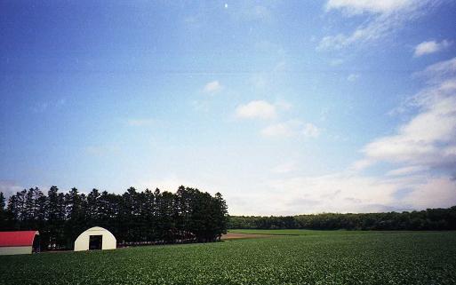 納屋、空、防風林