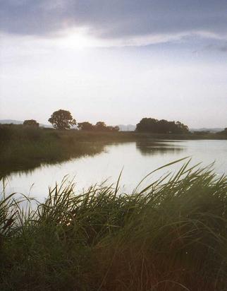 白鳥の来る沼