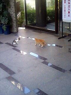 2hiki_20081016144318.jpg