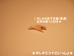 oreo080722-01