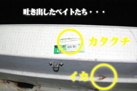 IMGP1674-1-1.jpg