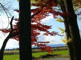 綺麗な紅葉でした…が、裏から撮ったのでイマイチ。。アホですね。