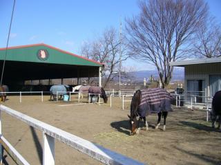 自転車道に面してる赤城乗馬学校。シュッとした綺麗なお馬さんばかりでした。でも臭いはウシと一緒(笑)。