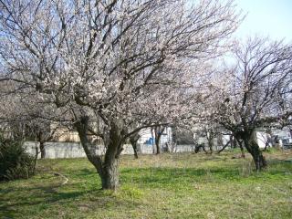 梅??だよね。凄く綺麗でした。春が近づいてきたのだな?と実感。
