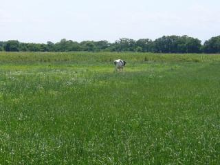 牛も草が美味しいことでしょう…^^;
