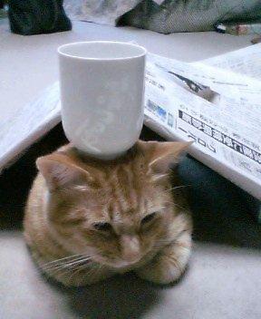 飼い猫は我慢ですw