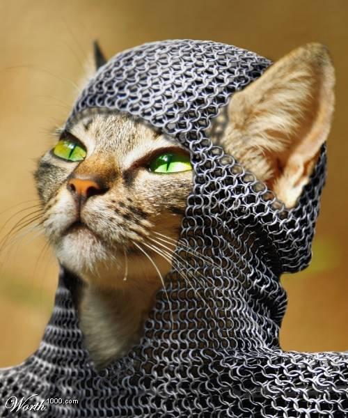戦うネコ その4