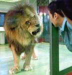 きっとライオンも怖いんだろうw