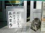((((((;゚Д゚))))))ガクガクブルブル まじ、猫が本気になったら恐いよ。。。