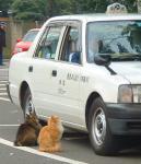 運ちゃん、乗車拒否したらあかんでwww