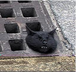 この猫、この後どうなったんだろうか……。気になる。。。