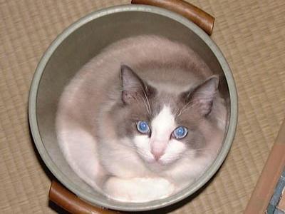 元祖猫鍋w