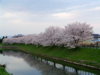 秋篠川沿い