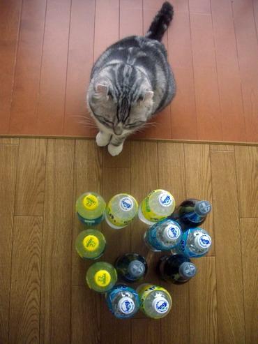 ボーリング?)