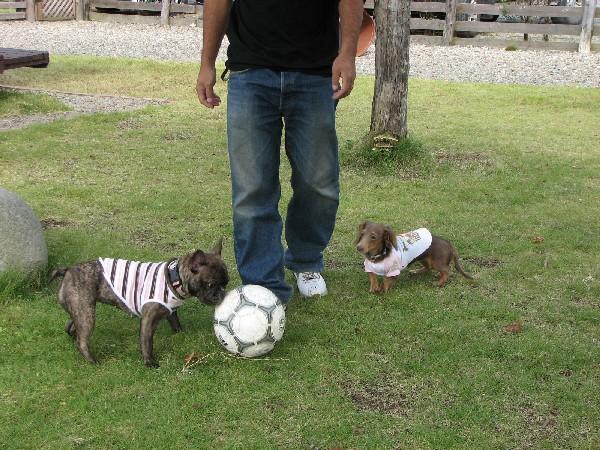サッカーボール。