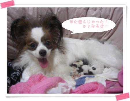 みるきー出産4匹