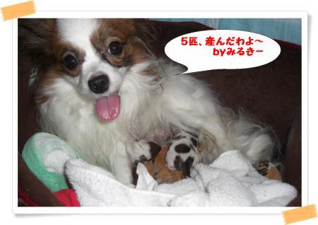 みるきー5匹出産