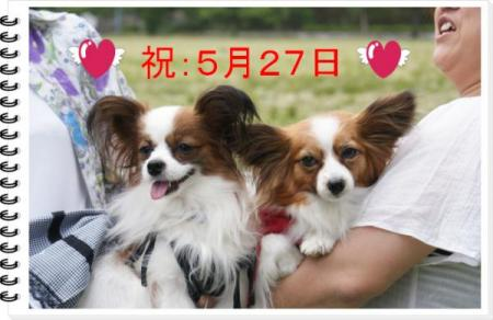逾晢シ夲シ墓怦・抵シ玲律_convert_20090525231535