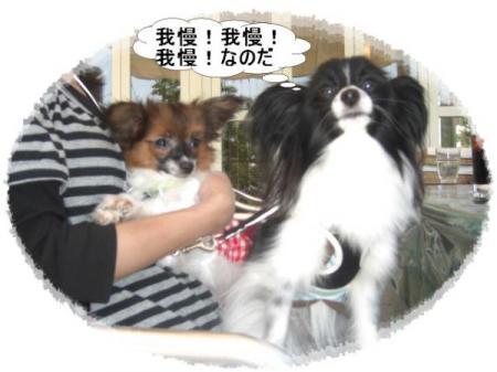 ぱぴー君&モカ