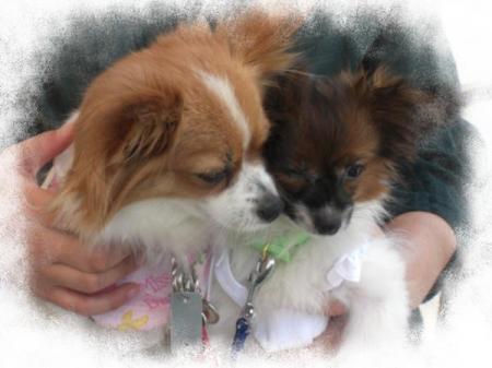 ラミィちゃん&モカ1