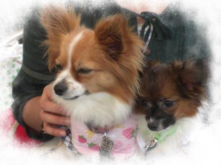 ラミィちゃん&モカ2