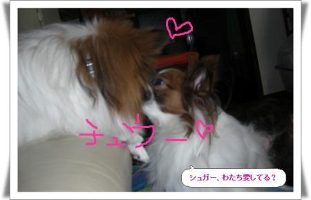 編集_image3855066