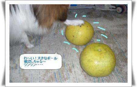 編集_image9417158