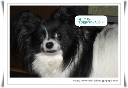 編集_image5483262