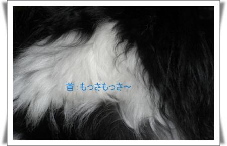 編集_image4330415