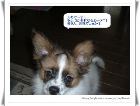 編集_image6259833