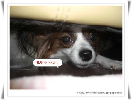 編集_image1079634