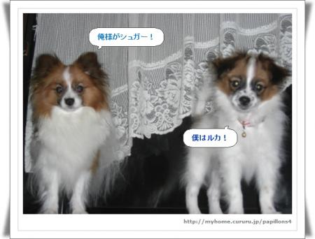 編集_image5991132