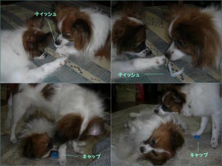 cats・狙convert_20090827122712