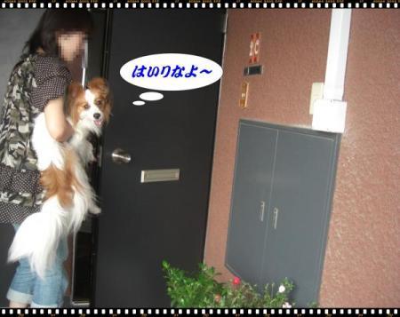 CIMG6220_convert_20090705134506.jpg