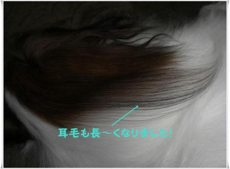CIMG6357_convert_20090716193531.jpg