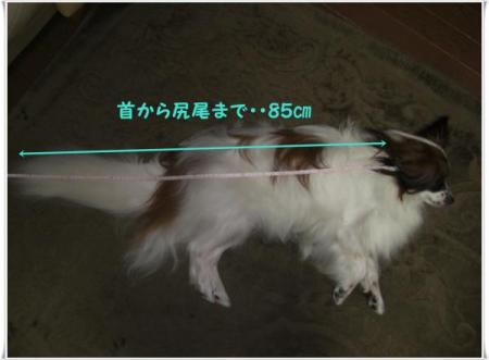 CIMG6364_convert_20090716194043.jpg