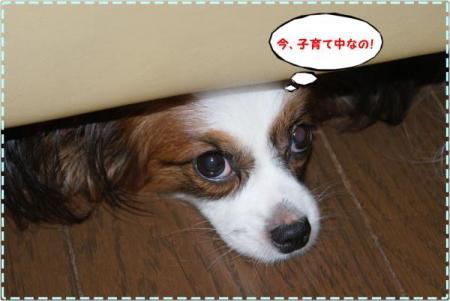 DSC03514_convert_20090820021613.jpg