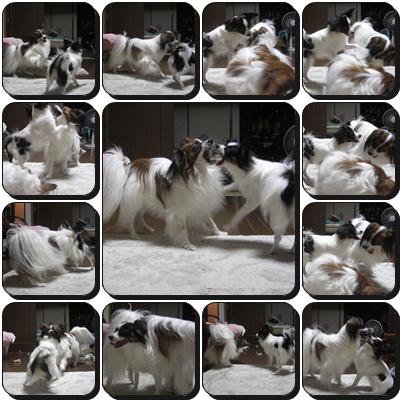 cats_20090914132424.jpg